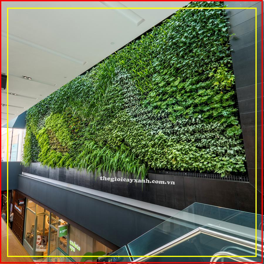 thi công mãng tường xanh