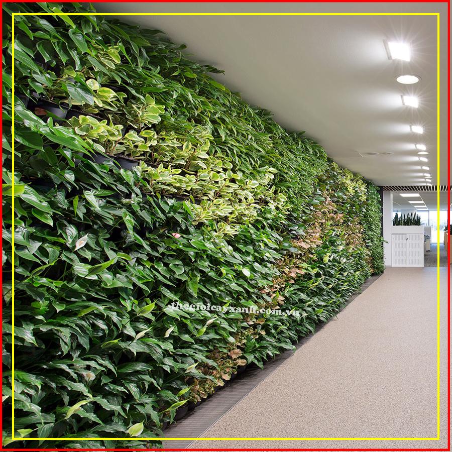 làm mãng tường xanh